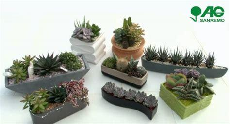 piante grasse da vaso vendita composizioni di piante grasse in vaso a imperia