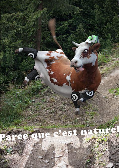 imagenes vacas locas vacas locas