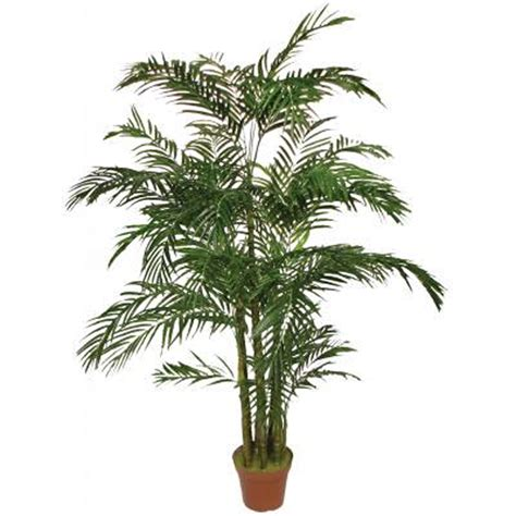 Outdoor Palm Tree L by 6 5 Areca Palm Tree Outdoor
