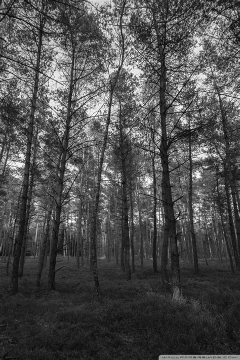black and white woodland wallpaper download forest wallpaper black and white gallery