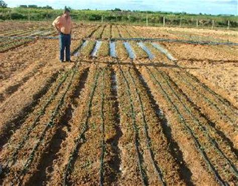 plantadores de mandioca irriga 231 227 o