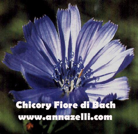 fiori per l anima fiori di bach mappa argomenti home page floriterapia