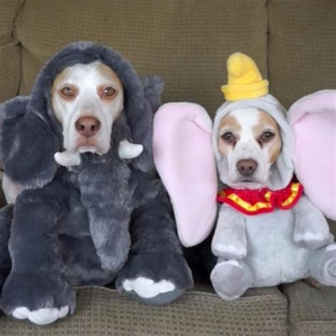 dogs   halloween costumes  viral video popsugar pets