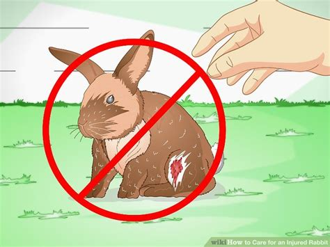 how to care for an injured rabbit with pictures wikihow