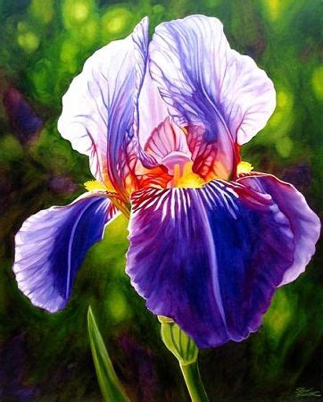 25 best ideas about iris flowers on iris pretty flowers and bearded iris