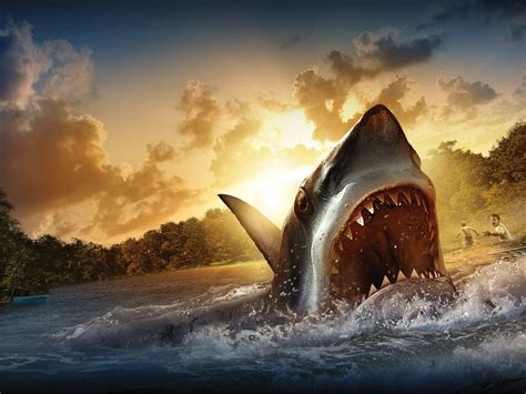 wallpaper ukuran laptop shark wallpapers wallpaper cave