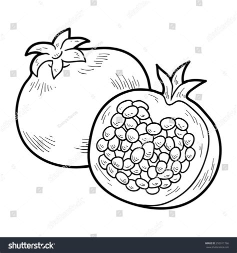 drawing images for coloring book fruits and vegetables pomegranate stock