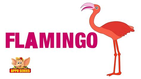animal sounds flamingo youtube