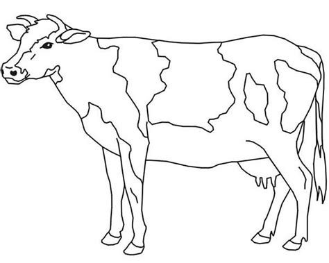 dairy cow coloring page free cow coloring pages printable