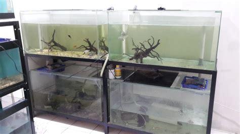 Sok Pipa Sambungan T Pipa Transparan Aquarium Akuarium dijual murah 4 set akuarium berserta raknya dan ada pipa pembuangan akuarium mantapss