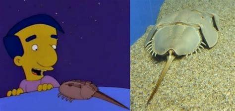 imagenes tiernas reales animales quot animados quot pero reales ciencia y educaci 243 n