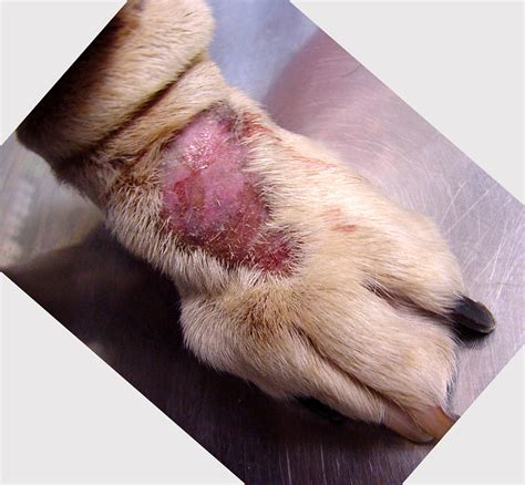 skin on dogs skin conditions