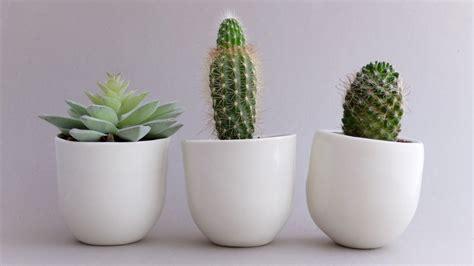 planter ideas  sculpture  design
