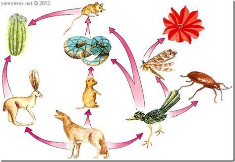 cadenas y redes alimentarias wikipedia redes alimentarias seres vivos