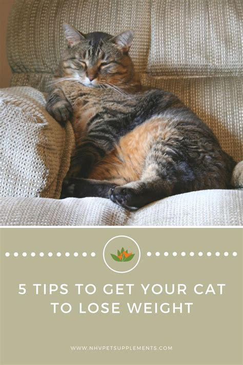 how to get your to lose weight 136 best diy tips for houses with pets images on siblings fur and furs