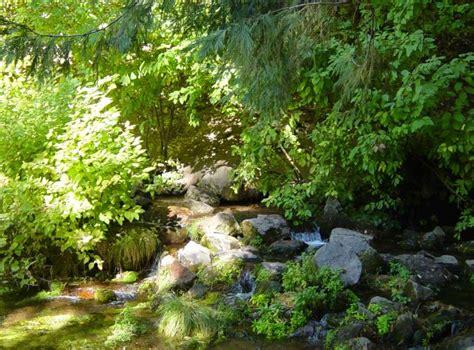 botanical gardens sacramento jard 237 n bot 225 nico de dunsmuir la enciclopedia libre