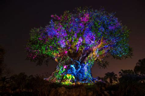 tree of light song tree of awakens in disney animal kingdom time show hd
