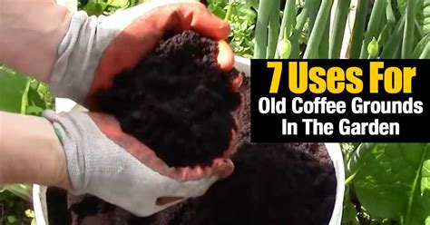Coffee Grounds For Gardening by 7 Uses For Coffee Grounds In The Garden Gardening