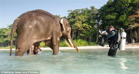 Water For Elephants Air Untuk Gajah By Gruen reniarap ini dia kendaraan keren yang muncul di fast