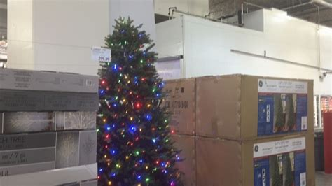 when does costco start selling chriatnas trees trees costco decore