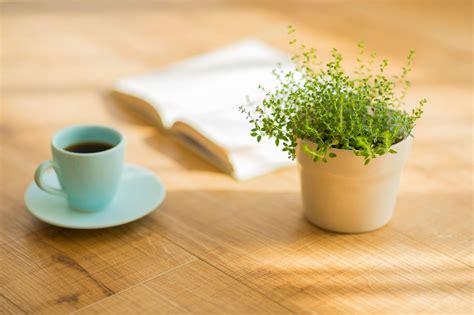 coffee    fertilizer   water plants  water