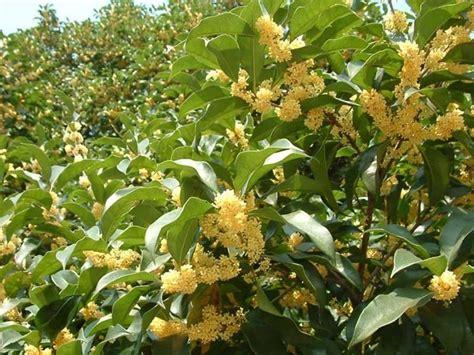 prezzi siepi da giardino piante da siepe prezzi siepi costo delle piante da siepe