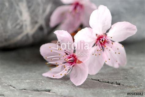 fotolia imagenes zen quot printemps zen quot photo libre de droits sur la banque d