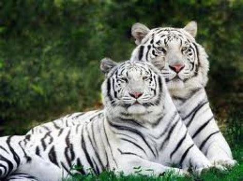 imagenes de animales en extincion lista animales en peligro de extinci 243 n