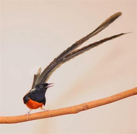Harga Pakan Burung American Selection harga macam macam jenis burung kicau dan hias gemar
