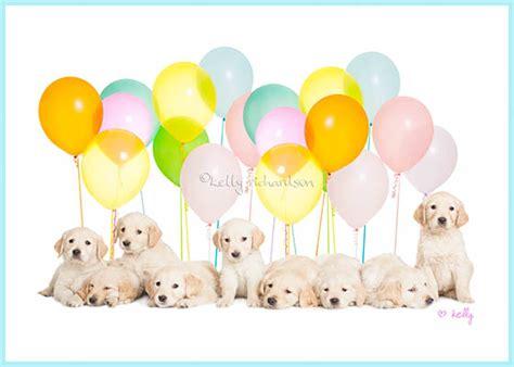 birthday puppies puppies birthday card 4k wallpapers
