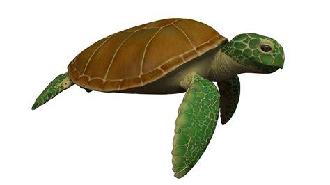 wallpaper cartoon turtle animated sea turtle www pixshark com images galleries