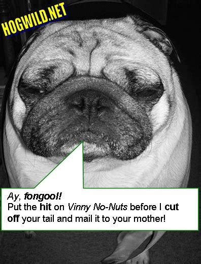 pug jokes pictures pug pictures pug puppies myspace pictures pictures for myspace