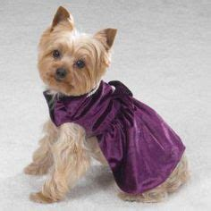 teacup yorkie clothing 1000 images about yorkies on teacup yorkie yorkie and dresses