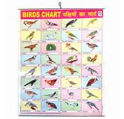 Birds Names In English On Share Online