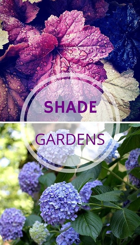17 best ideas about plants for shade on pinterest shade plants shade tolerant plants and