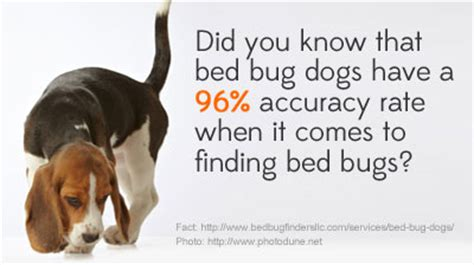 do bed bugs get on dogs how do bed bug dogs detect bed bugs