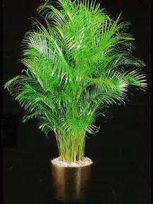 indoor tree low light indoor plants gallery the potted plant scottsdale