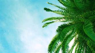 Tropical Wallpaper For Walls Palm Tree Backgrounds Pixelstalk Net