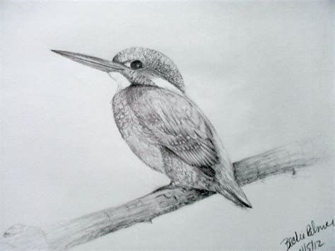 bird art drawing birds 1782212965 kingfisher bird drawing by sunshinelvr on my drawings kingfisher