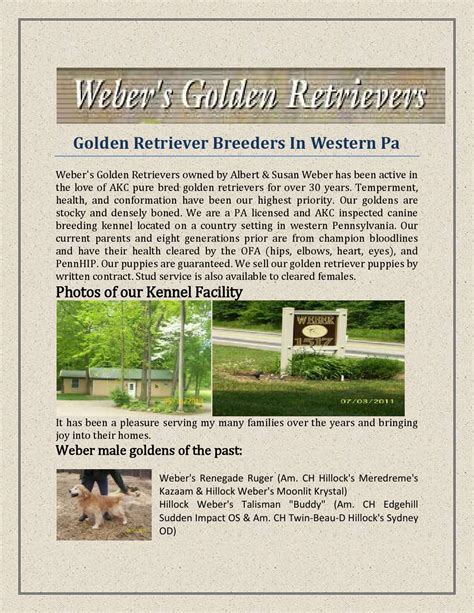 golden retriever breeders in western pa golden retriever breeders in western pa by webersgoldens issuu