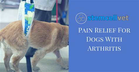 reliever for dogs relief for dogs with arthritis stem cell vet uk