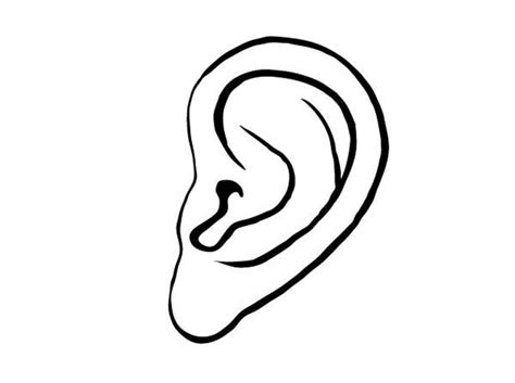 coloring page ear ear pictures for kids clipart best