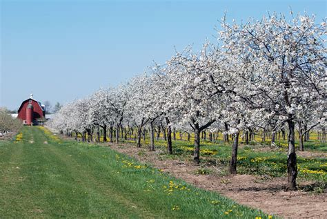 Cherry Orchards In Door County Wi by U S Wine Regions With A Unique Claim To Fame Huffpost