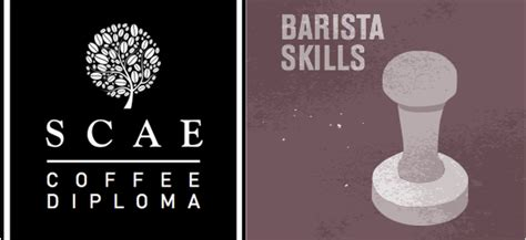 scae certificate barista skills intermediate 8500 barista hk