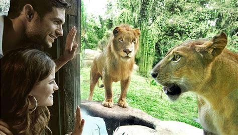 Bali Zoo Zoo With Lunch A Child bali sun tours 187 bali zoo park