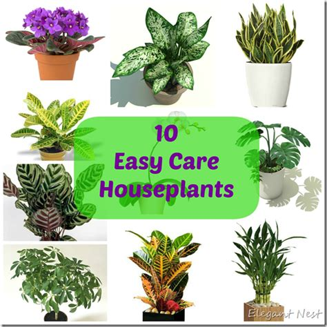 10 easy to care house plants