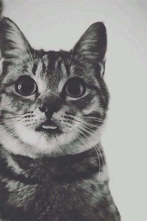 hipster tumblr oh lindo pinterest kitty cats untitled via tumblr image 1943046 by saaabrina on