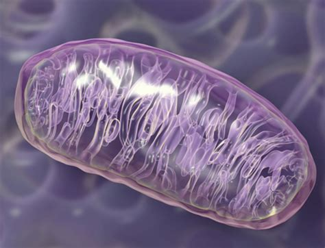 a rogue gone good: mitochondria was initially an energy