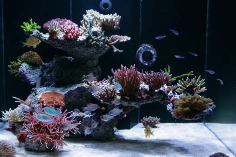 Marine Aquascaping Tips And Tricks On Creating Amazing Aquascapes