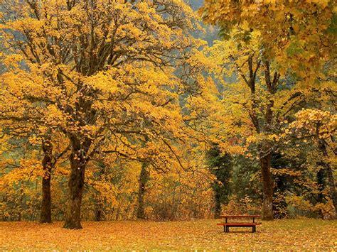 Life Style Desktop: Autumn Wallpapers HD Fall Nature Wallpaper